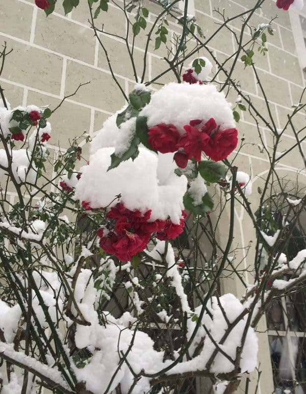 Snow-covered-flowers-St-Petersburg-Cathedral-Slazburg-chocolatechocolateandmore-44